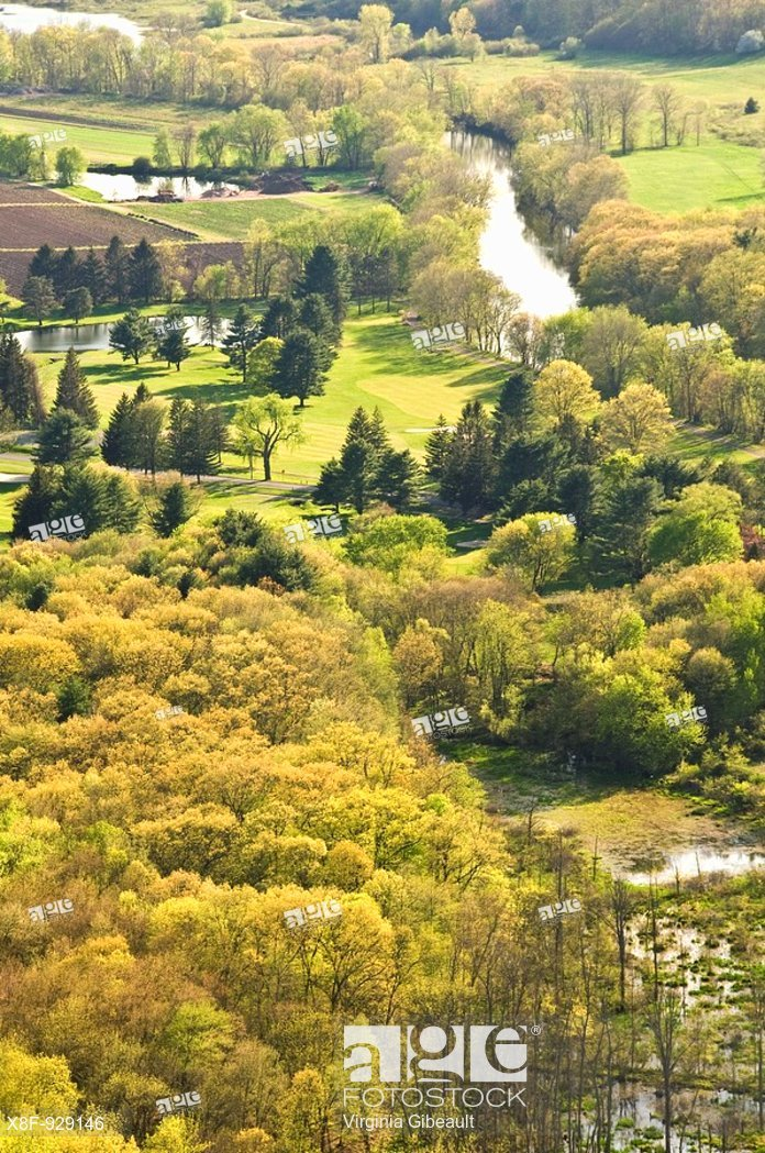 Stock photo of Avon, CT featuring numerous types of trees in harmony